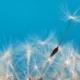 Libérez vos émotions Praticienne en résolution émotionnelle Vendée